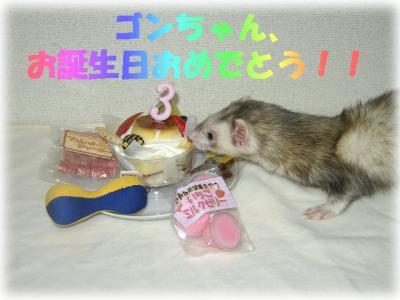 ゴン誕生日2008 1