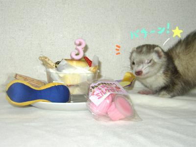 ゴン誕生日2008 2
