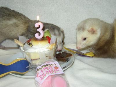 ゴン誕生日2008 3