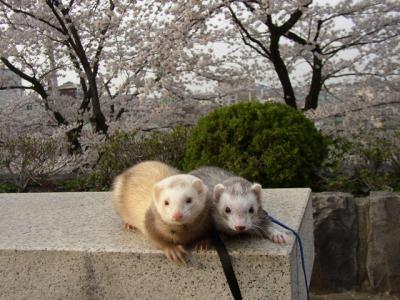 お花見2008 2