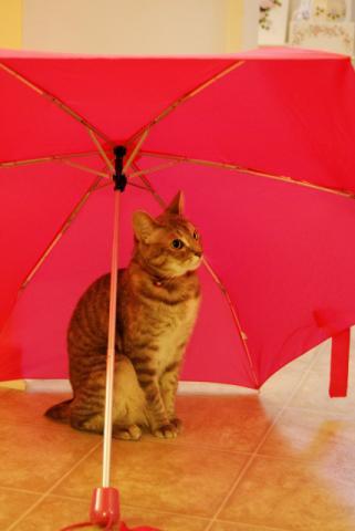雨はいやだよねぇ・・・