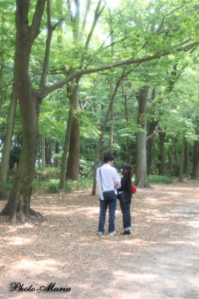 3-0906ajisai04.jpg