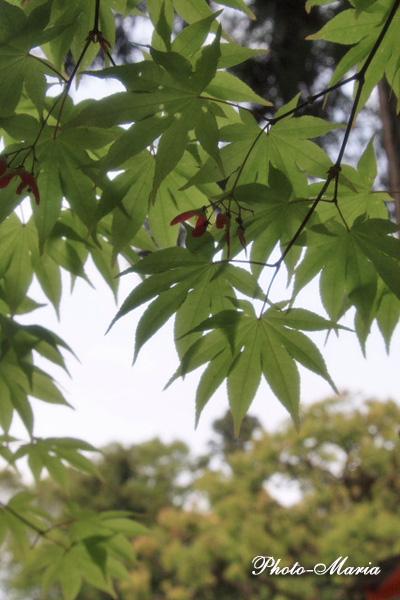 y3-0905yoshida04.jpg