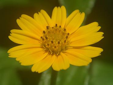 宮古島 MU(ムー)の花