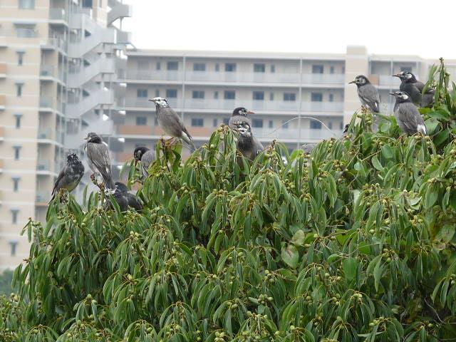 横の木に無数の鳥・・・