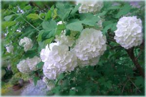biba-namu2007,5-1.jpg