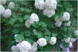 biba-namu2007.5.-2.jpg