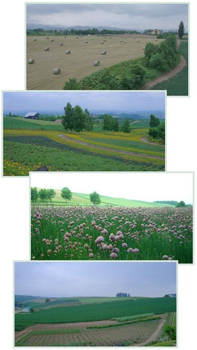 bieino-2007.6.jpg