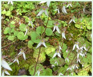 daimonnzisou2006.jpg