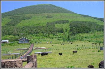 hatizyouzima2007-3.jpg