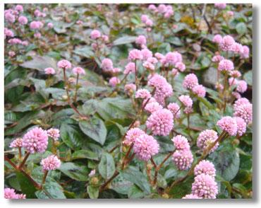 himetrusoba2005.11.jpg