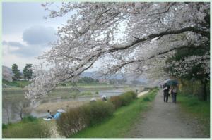 kamogawa2007.4.7.jpg