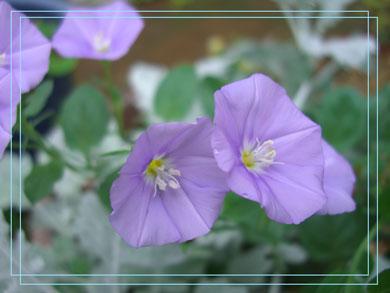 konboruburusu2006.jpg