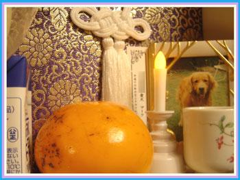 ma-ku2005.11.jpg