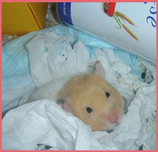 momizi.2006.1.8.jpg