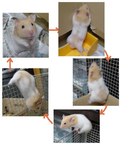 momizi2006.1.5.jpg