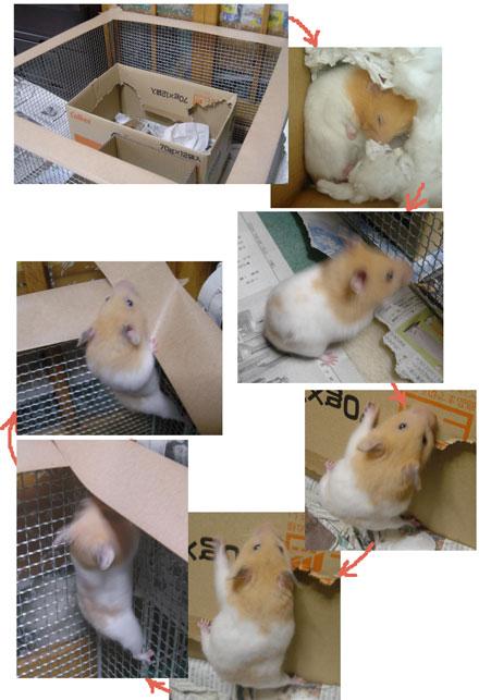 momizi2006.1.6.jpg