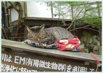 oohara.neko2006.jpg
