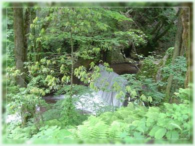 ooiwasann2006-2.jpg