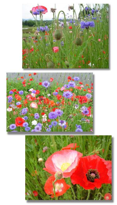 pori--2,2006.5.jpg