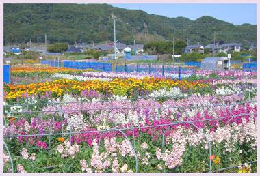 siokazeoukoku2007.jpg