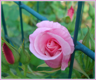 supanissyubyu-ti2007.5.jpg