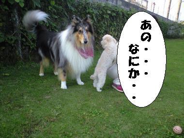 CA390009_380pe.jpg