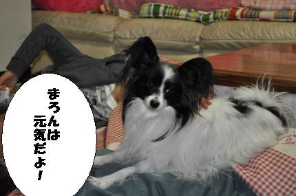 DSC_0059_convert_20091213201513.jpg