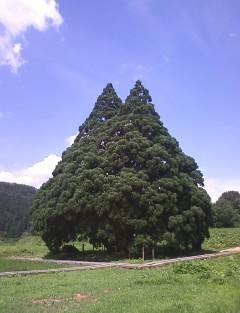 20090717 (8)