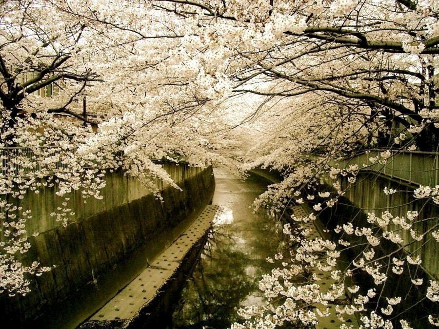 桜2009 2