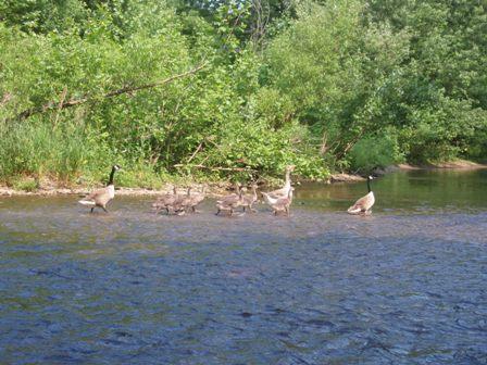 6-7 canoe 035
