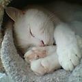 愛くるしい寝顔