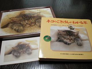 ネコ (寝顔)