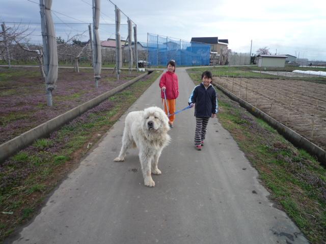 散歩されてます、娘たちが