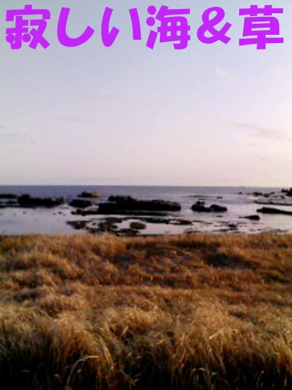 寂しい海&草…