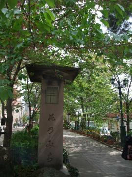 すっかり葉桜になった花の道