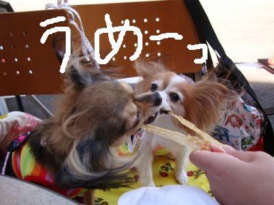 2008.10.1 カヨちゃんと (9)