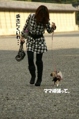2008,10京都♪ (37)