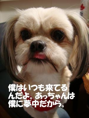 2008,10あっちゃんち (37)