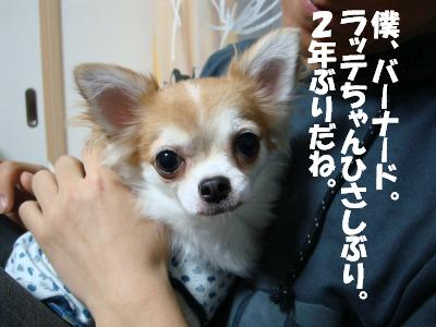 2008,10あっちゃんち (12)