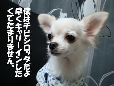 2008,10あっちゃんち (7)