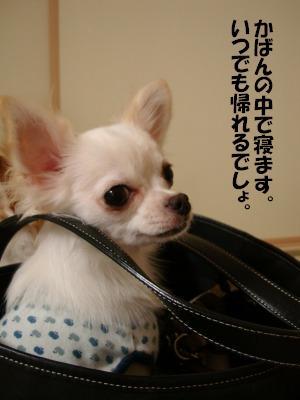 2008,10あっちゃんち (48)