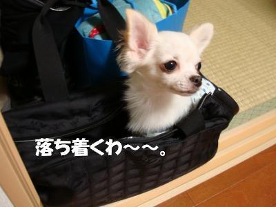 2008,10あっちゃんち (22)