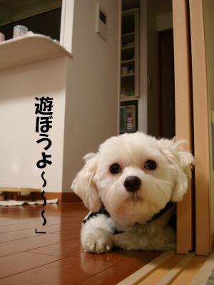 2008,10あっちゃんち (46)