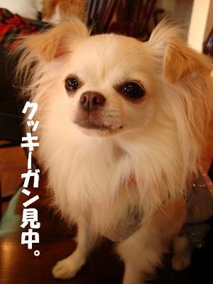 2008,10あっちゃんち (80)