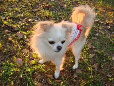 2008.10大泉l公園