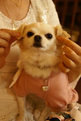 2008.10.14神戸 (14)