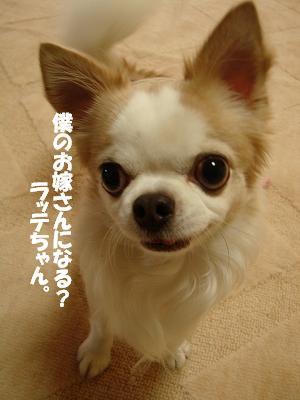 まりちゃんち (48)