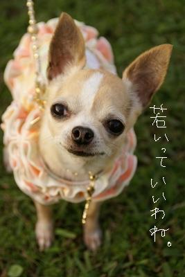 マロンママin堺 (94)