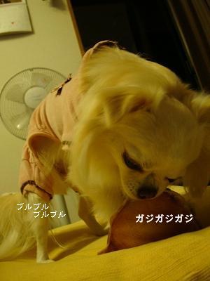 悪戦苦闘 (15)